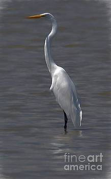 The Great White Egret by John Kolenberg