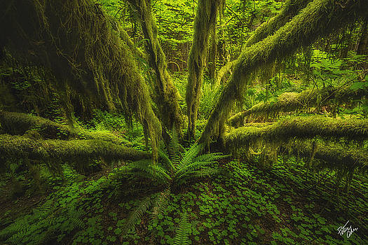 The Green Monster by Peter Coskun