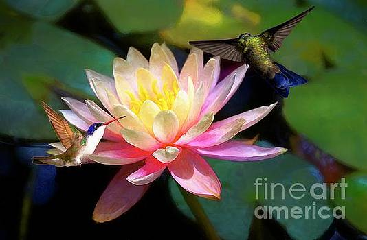 The Grutas Water Lillie With Hummingbirds by John Kolenberg