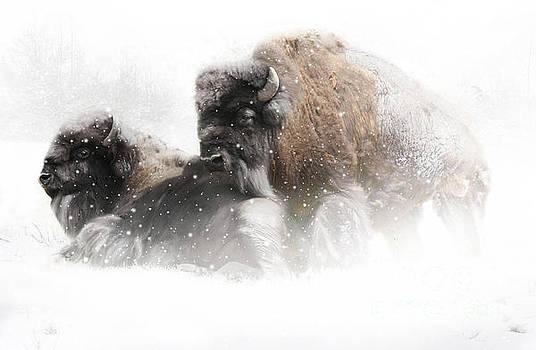 The Guardian II falling snow by Lynn Jackson