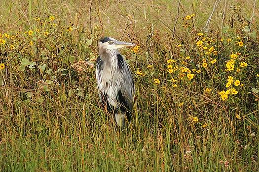 The Heron And The Fall by Valia Bradshaw