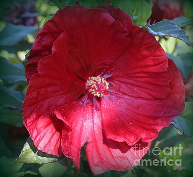 The Hibiscus of Late Summer by Dora Sofia Caputo Photographic Art and Design