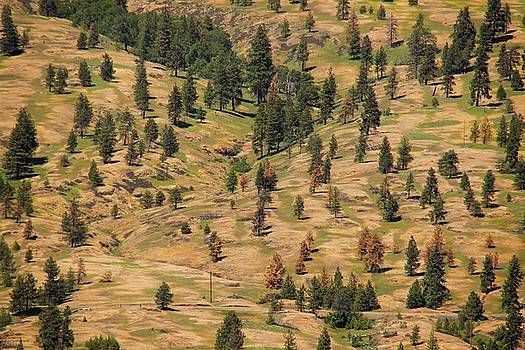 The Hills Are Alive by Hany Jadaa Prince John Photography