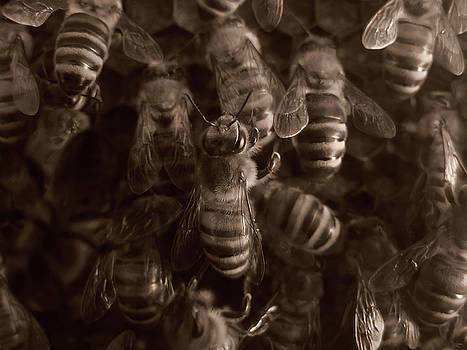 The Hive by Jeff Breiman