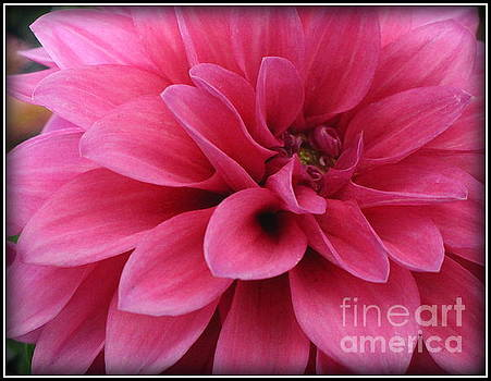 The Hot Pink Dahlia of Summer by Dora Sofia Caputo Photographic Art and Design