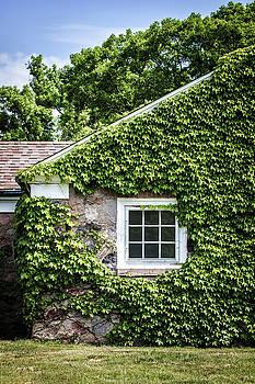 The Ivy House by Kim Hojnacki