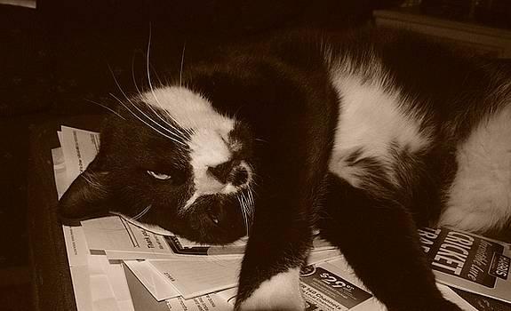 Cindy Nunn - The Joys of Paper