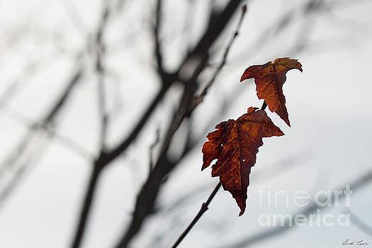 The Last Leaves of Autumn by Linda Lees