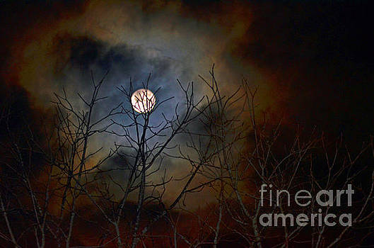 The Light of the Moon by Lila Fisher-Wenzel