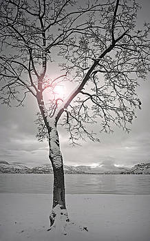 The Light Shines in Winter by Tara Turner