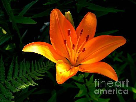 The Lily  by Elfriede Fulda