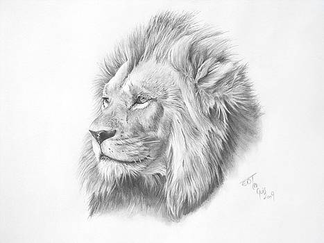 The Lion by Ed Teasdale
