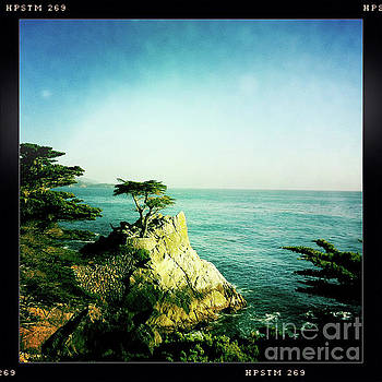 The Lone Cypress by Nina Prommer