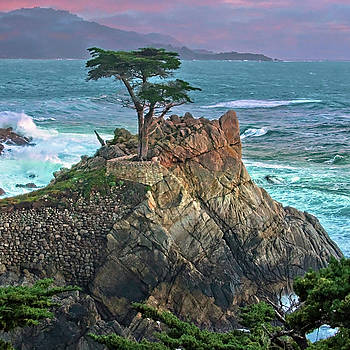 The Lone Cypress by Suzanne Stout
