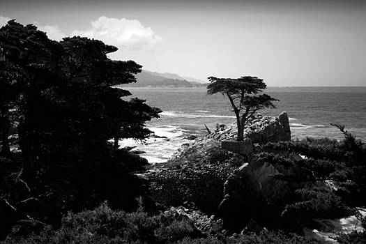 Joyce Dickens - The Lone Cypress Tree B And W