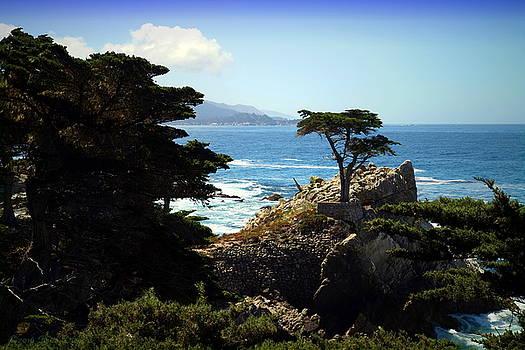 The Lone Cypress Tree by Joyce Dickens