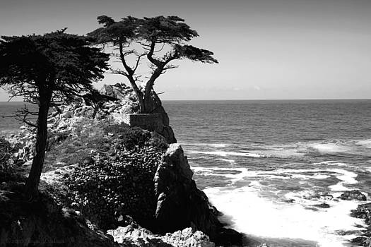 Joyce Dickens - The Lone Cypress Tree Two B And W