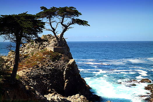 Joyce Dickens - The Lone Cypress Tree Two