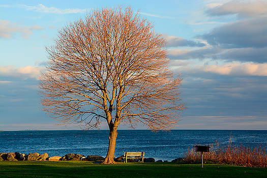 The Lone Maple Tree by Nancy  de Flon