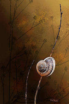 The lone snail by Thanh Thuy Nguyen