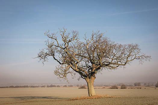 The lone tree by Jeremy Sage