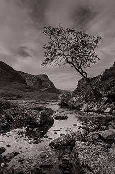 The Lone Tree of Glencoe by Ben Spencer