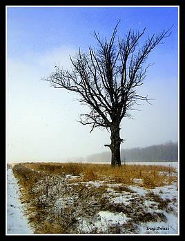 The Lone Tree by Trina Prenzi