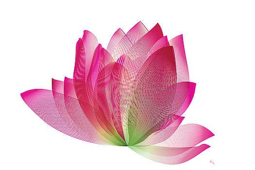 The Lotus by Rabi Khan