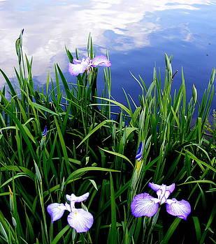 The Lovely Iris Mistake by Elena Tudor