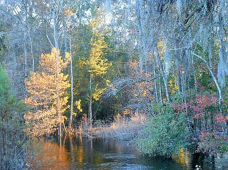 The magic of Autumn Sunshine by Kay Gilley