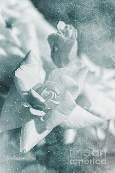 The Magic of Roses by Linda Lees