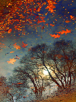 The Magic Puddle by Tara Turner