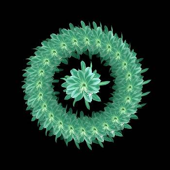 The Mandala of Sea GreenTropical Flower by Jacqueline Migell