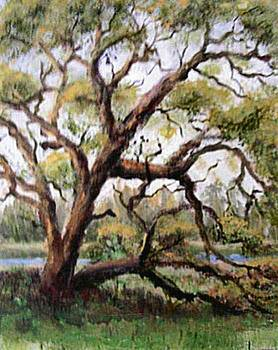 The Marsh Tree by Sue Coley