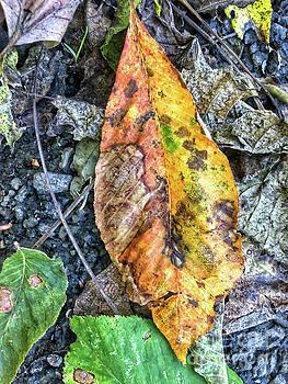 The Measure of Leaves by Kerri Farley