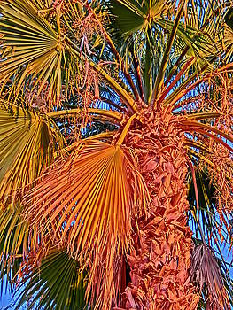 The Mighty Palm Palm Spring CA by Cheryl Ehlers