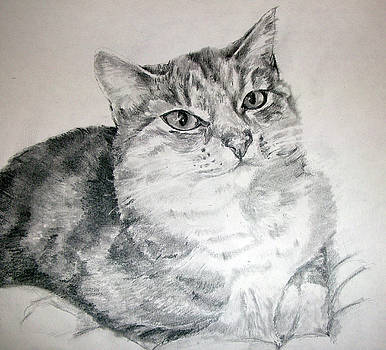 The most purrfect pet by Tanya Patey