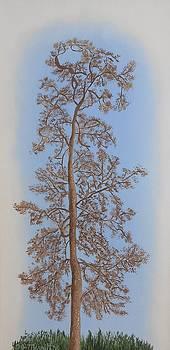 The Neighborhood Oak by Dorothy Merritt