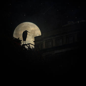 Chris Lord - The Night Of The Heron