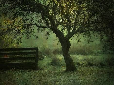 The Old Apple Tree by Mary Wolf