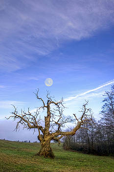 The Old Tree And The Moon by Sophie De Roumanie