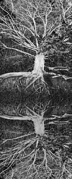 Debra and Dave Vanderlaan - The Old Tree