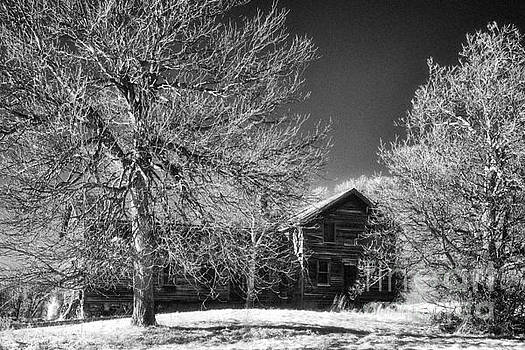 The Old Wood House by Jeff Holbrook