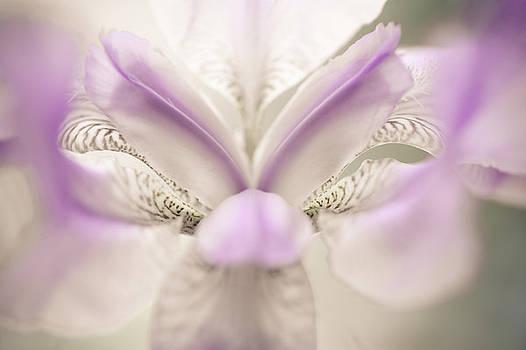 Jenny Rainbow - The Open Heart of Iris. White