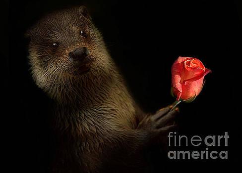 The Otter by Christine Sponchia