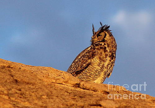 The Owl's Horns In The Breeze by Natalie Ortiz