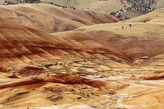 The Painted Hills Of Oregon - 1 by Hany Jadaa Prince John Photography