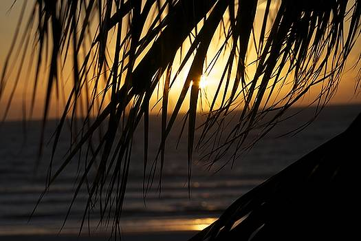 The palm tree in the sunset by Danielle Allard