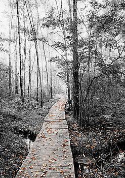 The Path by Antonio Gruttadauria