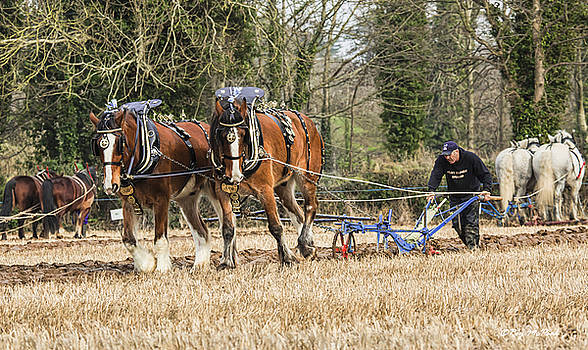 The Ploughman by Roy McPeak